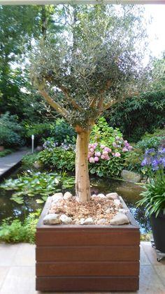 Olijfboom om houten bloembak