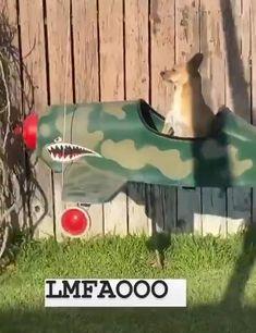 Animal Jokes, Funny Animal Videos, Cute Funny Animals, Funny Animal Pictures, Cute Baby Animals, Funny Cute, Funny Dogs, Animals And Pets, Cute Dogs