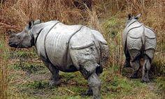 Jungle Safari in Nepal, National Park, Chitwan, Bardia,, Koshi tappu, Wildlife reserves, Elephant ride, Bird watching - Samrat Tours & Treks