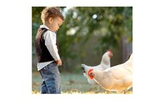 Can backyard chickens make you sick? Here's what you need to know. | From Organic Gardening