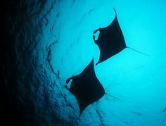 Manta Divers, Guraidhoo, South Male Atoll, Maldives