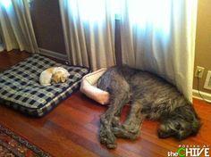 Bahahahaha!!!!! Poor big doggie...