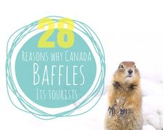 Canada hosts millions of visitors each year and each one of us leaves feeling well. a little baffled. Here are 28 reasons why Canada baffles its tourists Feeling Well, Travel Articles, Travel Themes, Road Trip, Finding Yourself, Wanderlust, Canada, Leaves, Adventure