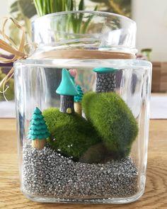 Miniaturowy las w słoiku