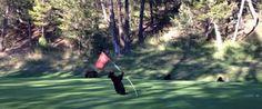 WATCH: Baby Bear Dances On B.C. Golf Course