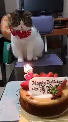 Happy birthday ~❤️ Emmm~ I don't like the candle 👋🏻 - Gatos Cute Funny Animals, Cute Baby Animals, Cute Cats, Funny Cats, Happy Birthday Video, Happy Birthday Funny, Happy Birthday With Cats, Happy Birthday Animals, Cat Birthday