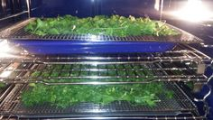 2/21/15. Pulled out all the parsley...2 trays drying