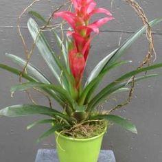 20 Beautiful Indoor Flower Plants
