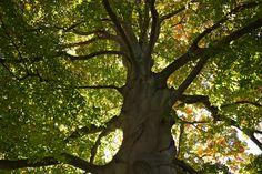 My Love Affair With Trees