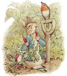 Classic Children's Book Illustrations - Beatrix Potter - Peter Rabbit