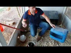 Como usar corretamente comedouros e bebedouros e minimizar desperdícios.Evento Guaxupé índio gigante - YouTube