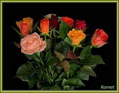 תוצאה של brillo con תוסס תמונה פרח