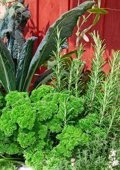 Rosmariini: istutus ja hoito   Meillä kotona Outdoor Spaces, Herbs, Plants, Food, Ideas, Outdoor Living Spaces, Essen, Herb, Meals