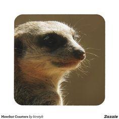 Meerkat Coasters