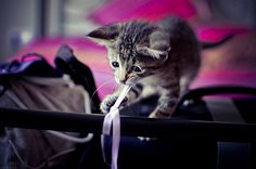 I will be so glad to get this gift wrapping done!  #cats