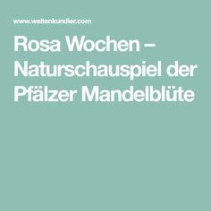 Rosa Wochen – Naturschauspiel der Pfälzer Mandelblüte