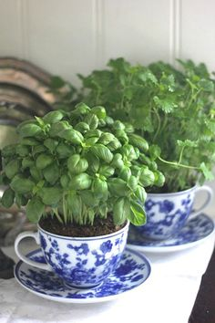 Indoor Herb Garden Ideas - Creative Juice | @Mindy CREATIVE JUICE | @getcreativejuice.com