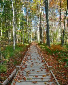 Jessop Path Boardwalk , Acadia National Park