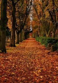 #EnviroTip: Don't burn or throw out fallen leaves. Autumn leaves make excellent, micronutrient-packed mulch.