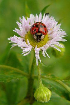 Lady bug lady bug fly away home
