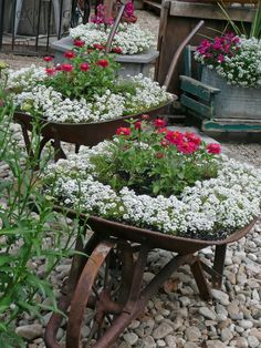 Alyssum is great anywhere. Put some in the Claus Palette Garden. Our Life in Idaho: 2009 Garden Tour Red flowers are not part of this palette.