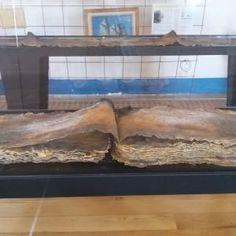 Frutto di un restauro durato sette anni sono stati recuperati dal pescatore che trovò il Satiro, erano il carico di un vascello spagnolo