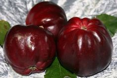 Roter Herbstkalvill - schwarzroter süßer Apfel - Apfelbaum sehr alte Sorte *5