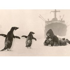 Penguin pic from the first Russian expedition to Antarctic continent in 1955
