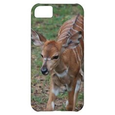 baby gazelle iPhone 5C Cover