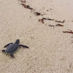 It's World Turtle Day! From a tiny baby bog turtle to a massive leatherback, turtles come in many shapes and sizes. Found gliding through the open ocean or slowly trudging over desert plains, they are...
