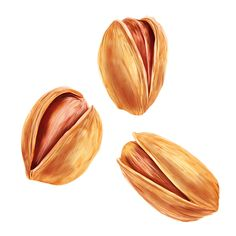 Set of illustrations. Fruits and nuts on Behance