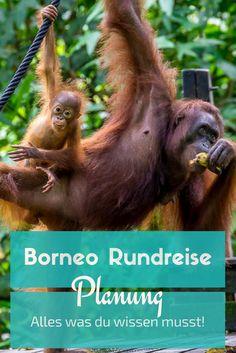 Hier findest du alles Wissenswerte sowie Tipps für deine Reiseplanung nach Borneo Malaysia. Food, Unterkünfte und Sehenswürdigkeiten und Kosten für eine Borneo Rundreise. #borneo #sarawak #sabah #malaysia