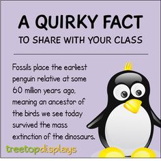A quirky fact about penguins to share with your class - from Treetop Displays. Visit our TpT store for printable resources by clicking on the provided links. Designed by teachers for Pre-Kindergarten to Grade. Fun Facts For Kids, Fun Facts About Animals, Animal Facts, Wtf Fun Facts, Funny Facts, Kindergarten Homeschool Curriculum, Pre Kindergarten, Homeschooling, Classroom Fun