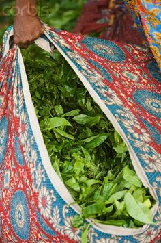 Bag of Tea Leaves, Kerala _ Sacca cn foglie del Te' Objets Antiques, Amazing India, Designer Handbags Online, Kerala India, Tea Art, My Tea, India Travel, Tea Time, The Incredibles