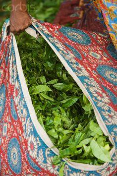 Bag of Tea Leaves, Kerala