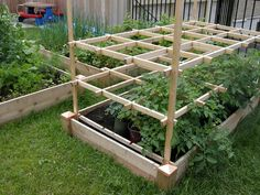 Tomatos Gardening Oh my gosh yes THIS! my tomatoes are always way to big for even the strong cages. raised bed tomato trellis - The tomatoes were falling over when I returned. I got them propped up on the trellis and trimmed the bottom leaves. Raised Vegetable Gardens, Veg Garden, Garden Trellis, Edible Garden, Lawn And Garden, Diy Trellis, Vegetable Gardening, Vegetable Design, Trellis Ideas