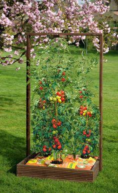 Tomaten, Rosen und Co.: Dank Rankgitter lassen sich die Kletterpflanzen leicht anbauen. Wir zeigen den Bau des Pflanzkastens.