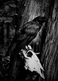 w e l c o m e Wiccan, Pagan, Harvest Season, Fall Harvest, Autumn Fall, Wallpaper Pc, Samhain, Dark Wood, Bald Eagle