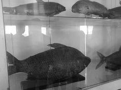 Peixes . . .