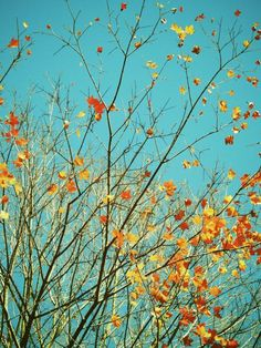 Beautiful Autumn - Gold, Red, Brown,Yellow, Orange  Colorful Autumn - Fall foliage - Turquoise Sky - Nature Autumn Art Photograph on Etsy, $25.00