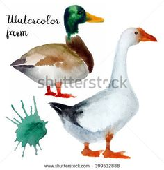 Naturalistic hand-draw watercolor farm bird isolated white background