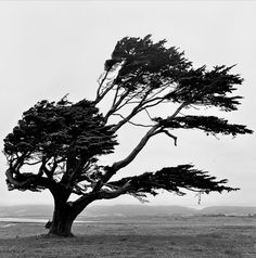 so going along with Stephanie's idea. maybe half the tree could blow away (much like the birds flying) and the other could e stationary? just thinking. Bonsai, Christina Rossetti, Mystical Forest, Lone Tree, All Nature, Tree Leaves, Patterns In Nature, Landscape Photos, Tree Of Life