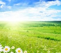 beautiful grass view greenery and little flowers seen in the scenery