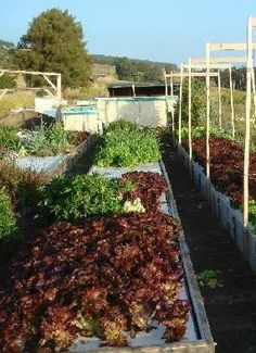 We planted 90 different vegetable varieties in our first aquaponics system for market tests and to see what grew best.