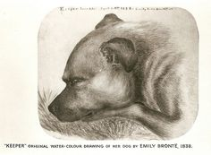Emily Bronte's mastiff, Keeper, as drawn by her. Bronte reportedly got out of bed to feed him on the day she died of consumption. Bronte Sisters Books, Bronte Parsonage, Self Portrait Art, Masterpiece Theater, Emily Bronte, Writers And Poets, Classic Literature, Dog Art, Street Art