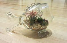air plant terrarium ideas | ... fishing inside mini air plant terrarium / glass vase / gift for dad