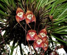 Orchids that look like animals - Google Search
