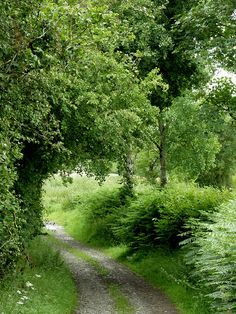 Farm track west of Stags Head, Ceredigion - The track leads to fields both sides of the infant Nant y Maen. The track may possibly have reached as far as Sarn Helen near SN63455891.
