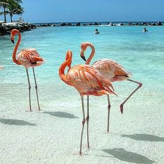Can NOT wait to visit #flamingobeach in Costa Rica in 3 months time after a friends wedding at #playadelcarmen.  Body prep has started ! Can't look Chubby next to the Flamingos  #holiday #Travel #Wedding #flamingo #Beach #tropical #blueskies #Love  #clearwater #sunsets #Sunshine #playadelcarmen #costarica2016 #Mexico by karyssaleighmakeupartist