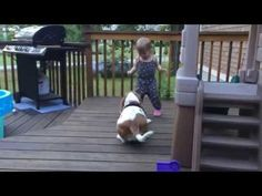 Rescue Basset Having the Time of Her Life With Little Girl | Canine Distractions